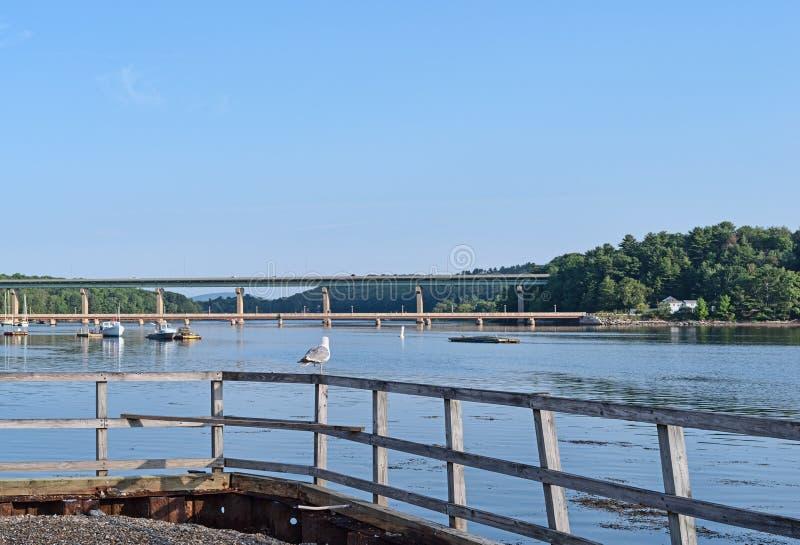 Zeemeeuw op leuning in Belfast, Maine in de zomer royalty-vrije stock fotografie