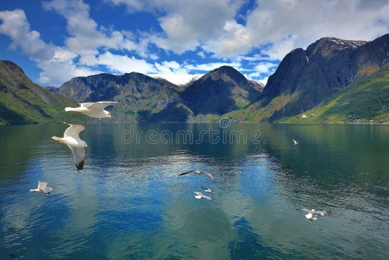 Zeemeeuw/Sognefjorden royalty-vrije stock fotografie
