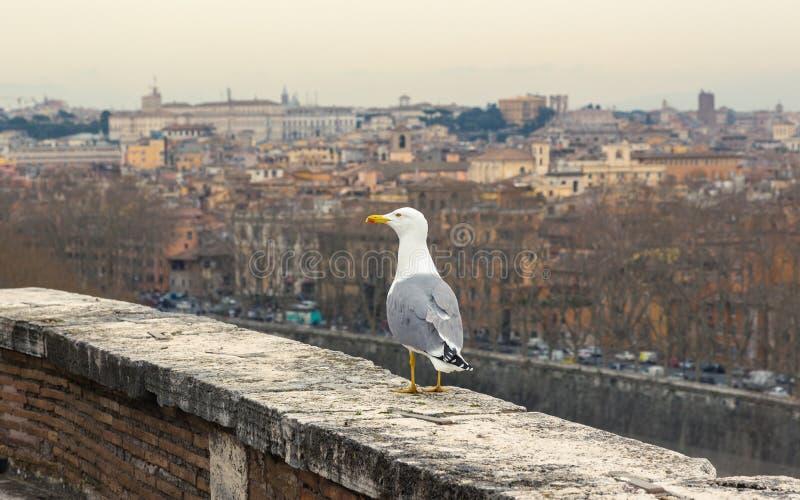Zeemeeuw tegen de stadsmening van Rome royalty-vrije stock fotografie