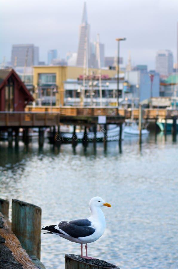Zeemeeuw tegen Visser Wharf in San Francisco stock fotografie