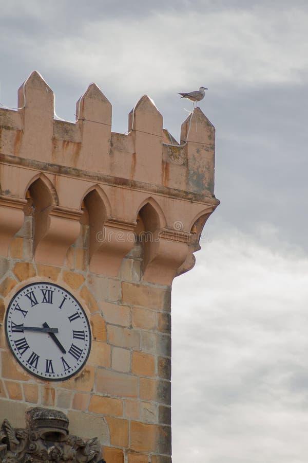 Zeemeeuw in toren met klok stock afbeeldingen