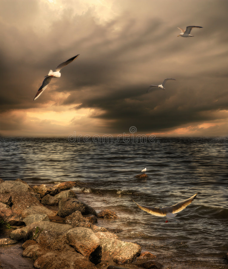 Zeemeeuwen stock afbeelding