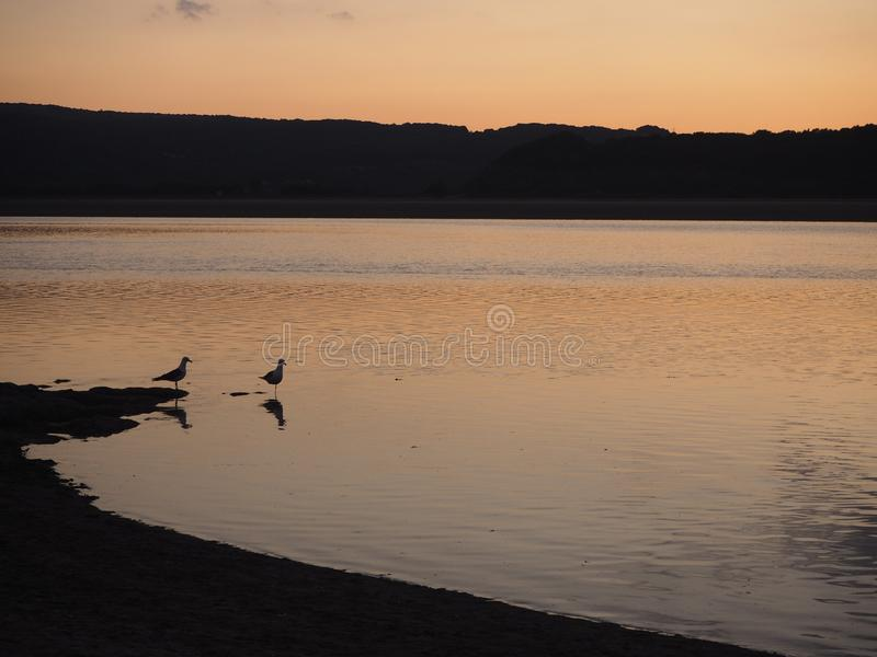 Zeemeeuwen bij zonsondergang op Kent Estuary, Cumbria, Engeland royalty-vrije stock foto