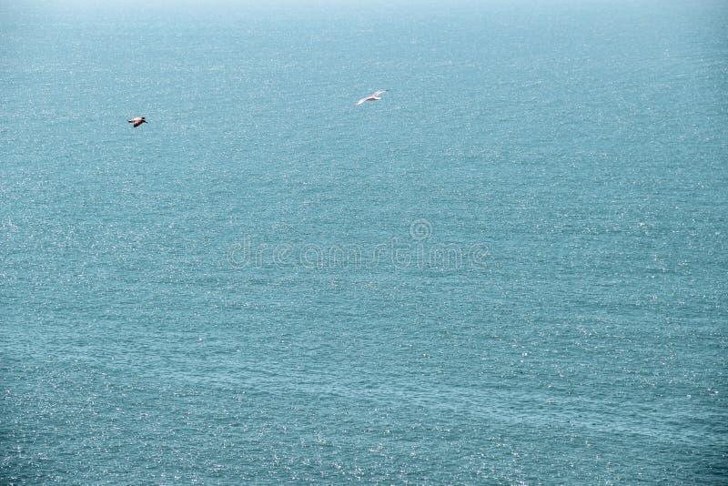 Zeemeeuwen die bij de hemel vliegen royalty-vrije stock afbeeldingen