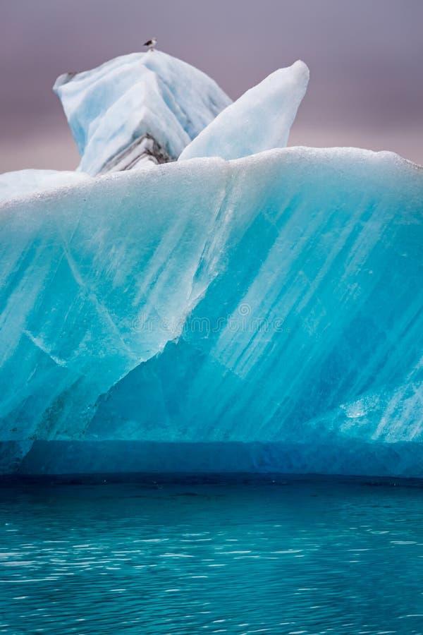 Zeemeeuwen die bovenop ijsberg, IJsland zitten stock afbeeldingen