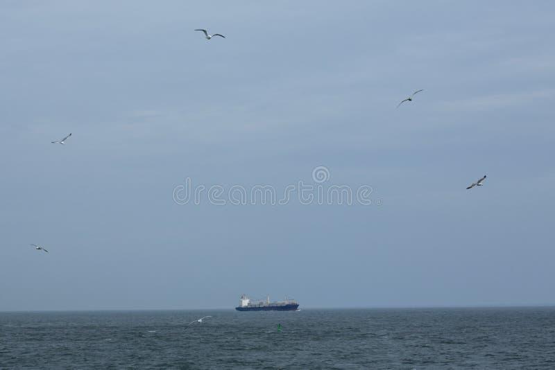 Zeemeeuwen die dichtbij een containerschip stijgen, mond van de Rivier van Delaware royalty-vrije stock afbeelding