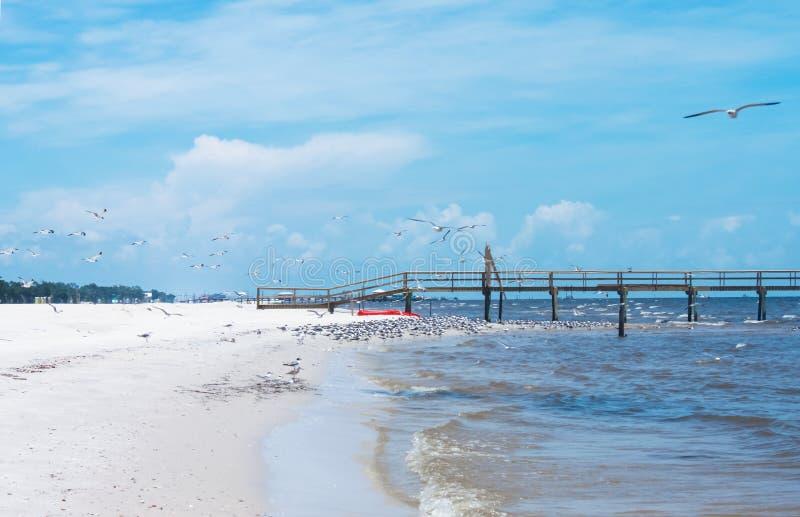 Zeemeeuwen die dichtbij een houten pijler in zuidelijke Verenigde Staten langs de Golf van Mexico zwermen stock afbeelding