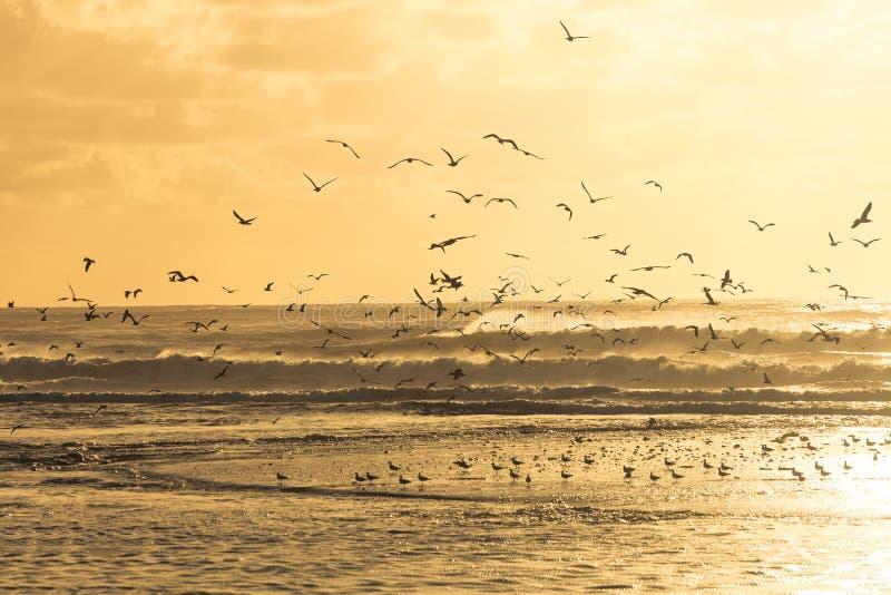 Zeemeeuwen die een strand opstijgen tijdens zonsondergang royalty-vrije stock fotografie