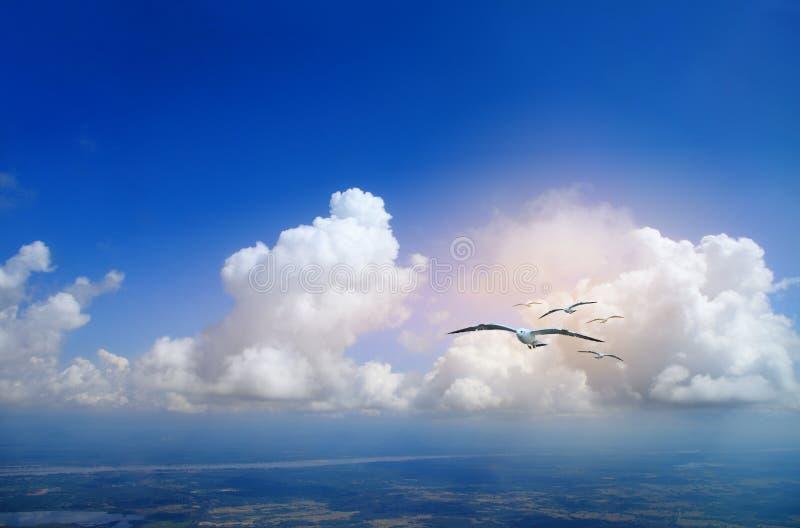 Zeemeeuwen die op een blauwe bewolkte hemel vliegen stock foto