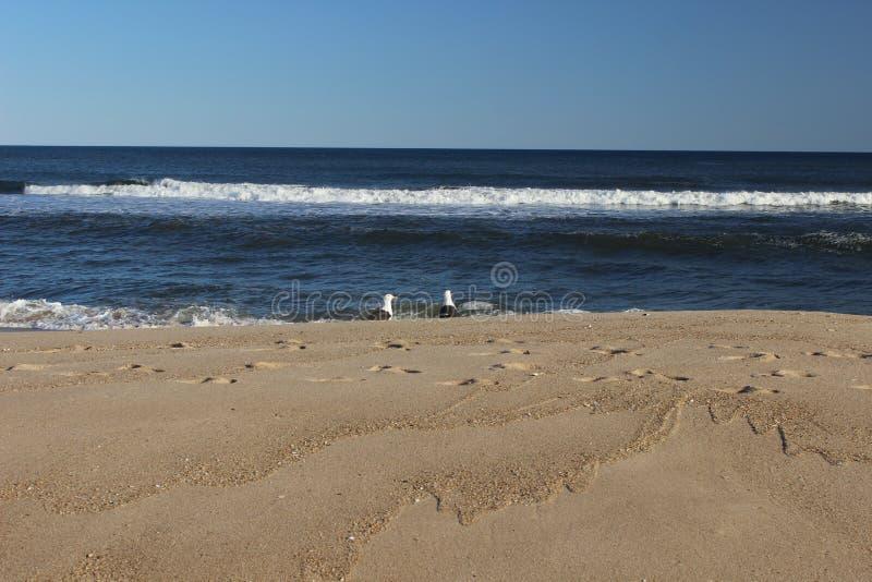 Zeemeeuwen die over golven bij zandig kustoever oceaanstrand vliegen stock fotografie
