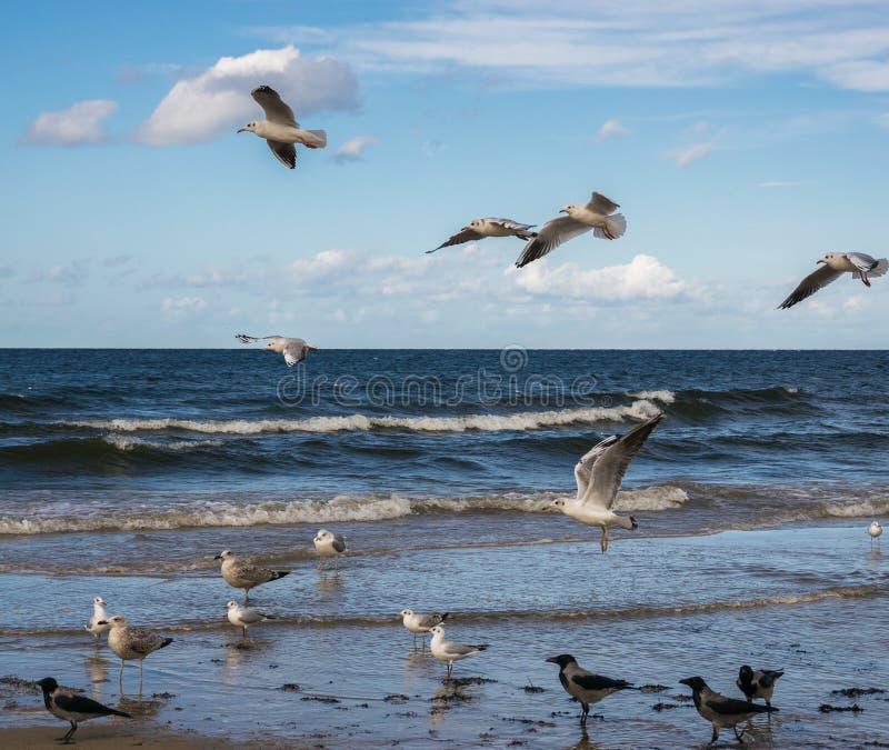 Zeemeeuwen die over het blauwe overzees vliegen en zich in ondiep water bevinden royalty-vrije stock fotografie