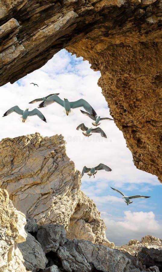 zeemeeuwen in een steenkader stock foto's