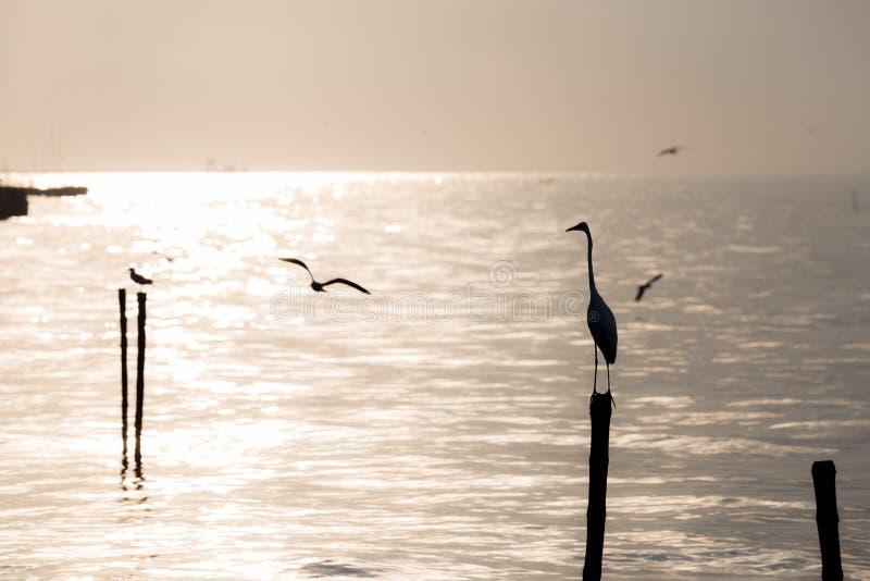 Zeemeeuwen en aigrette op het strand royalty-vrije stock afbeelding