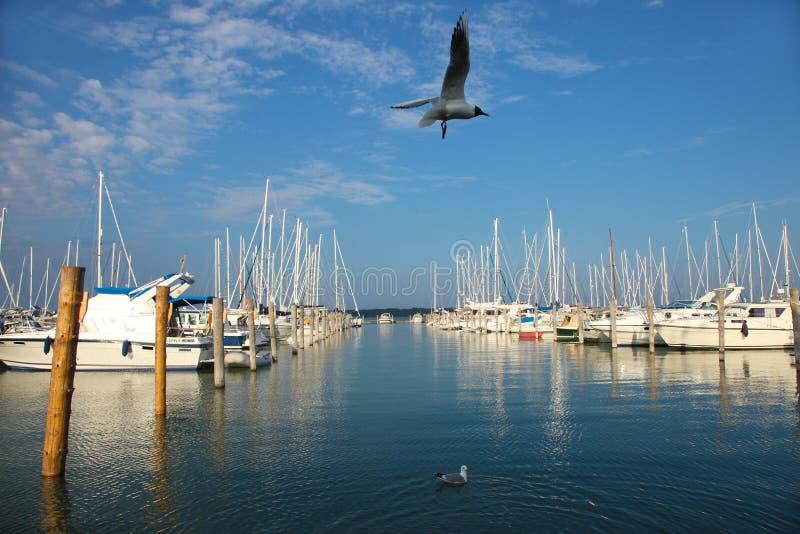 Zeemeeuwen en jachten in Marienhamn-haven stock fotografie