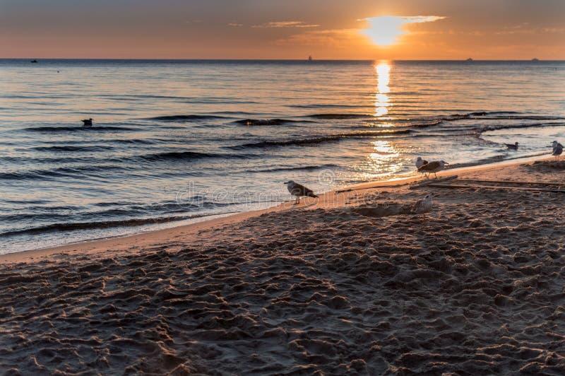 Zeemeeuwen en mooie zonsopgang bij Poolse overzeese kust royalty-vrije stock foto