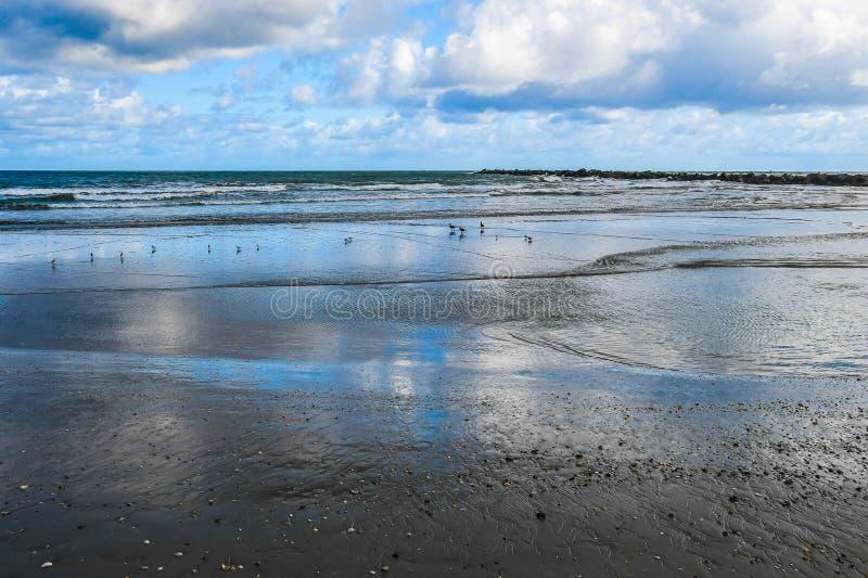 Zeemeeuwen en strandlopers op een open strand royalty-vrije stock afbeelding