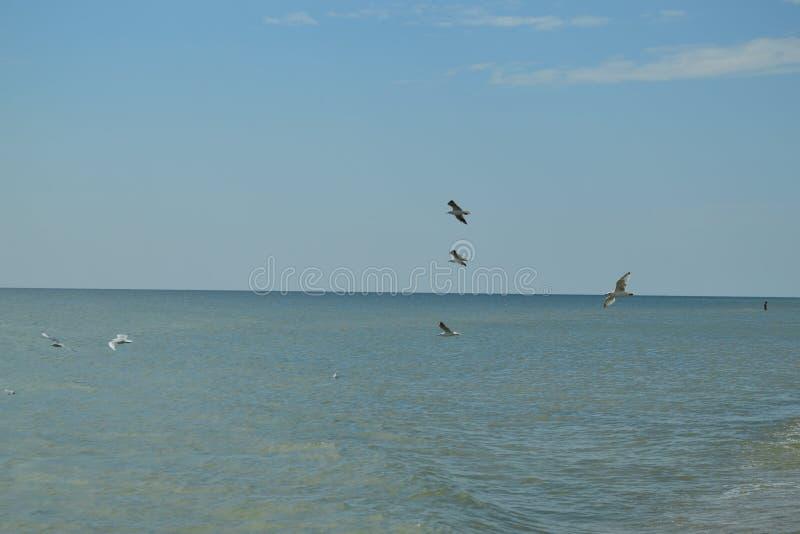 Zeemeeuwen het vliegen royalty-vrije stock afbeelding