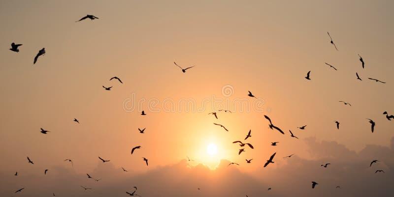 Zeemeeuwen met mooie zonsondergang royalty-vrije stock afbeeldingen