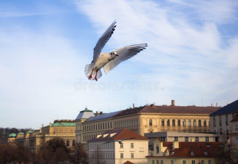 Zeemeeuwen op de achtergrond van de rivier en de mooie gebouwen in Praag op een Zonnige dag Mooie mening van de stadsarchitectuur stock afbeelding