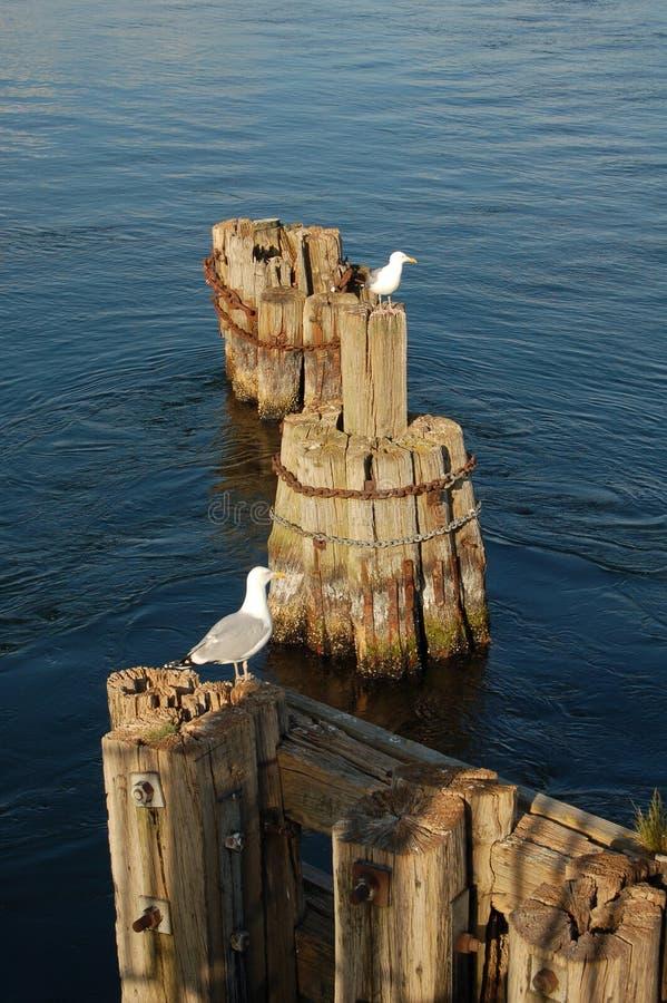 Zeemeeuwen op de brugresten stock afbeelding
