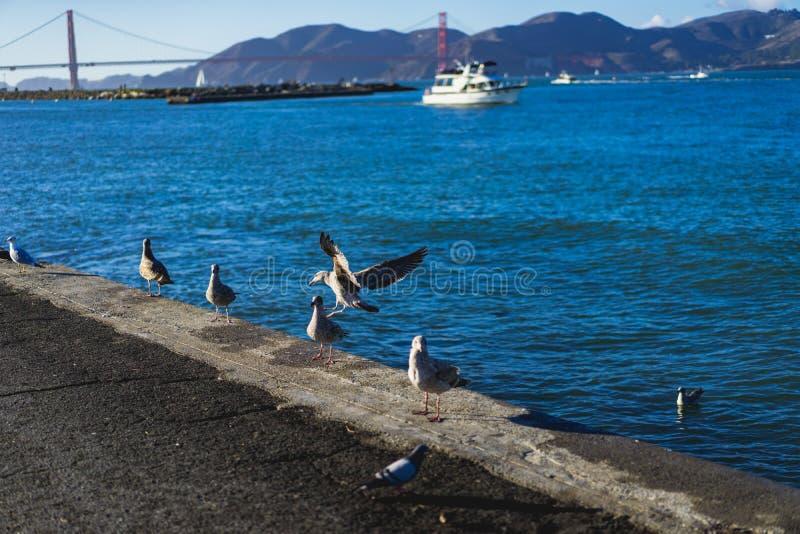 Zeemeeuwen op de rand van het water royalty-vrije stock fotografie