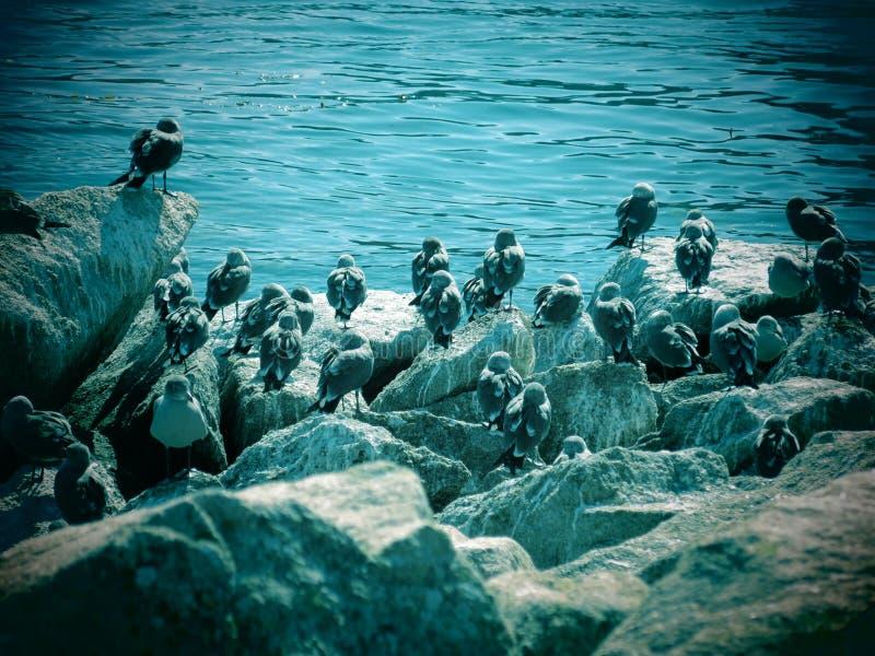 Zeemeeuwen op een rotsachtige kustlijn royalty-vrije stock foto