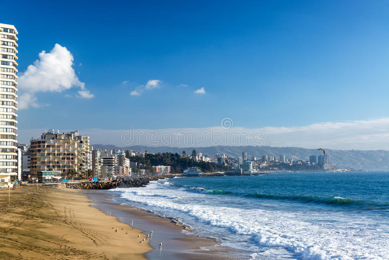 Zeemeeuwen op een Strand in Chili stock foto's