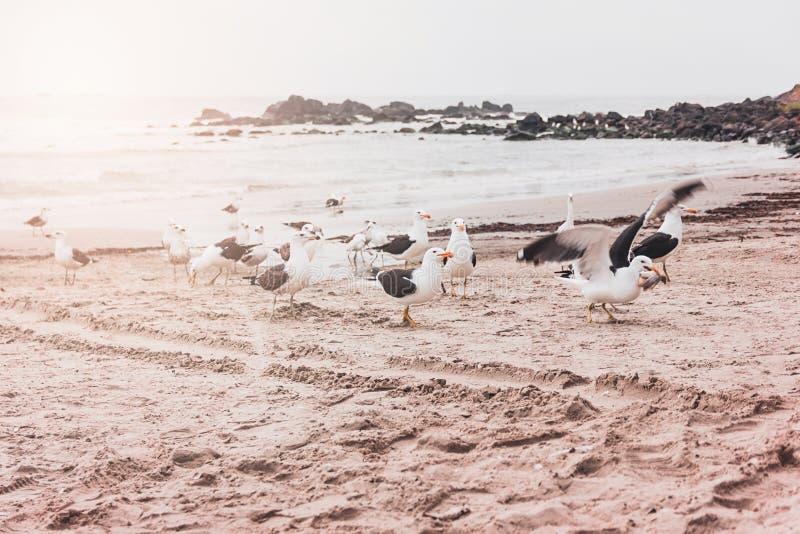 Zeemeeuwen op het strand op een zonnige dag royalty-vrije stock foto's