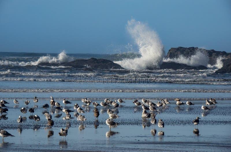 Zeemeeuwen op het zandige strand royalty-vrije stock afbeeldingen