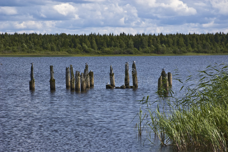 Zeemeeuwen op houten kolommen dichtbij riverbank royalty-vrije stock foto's
