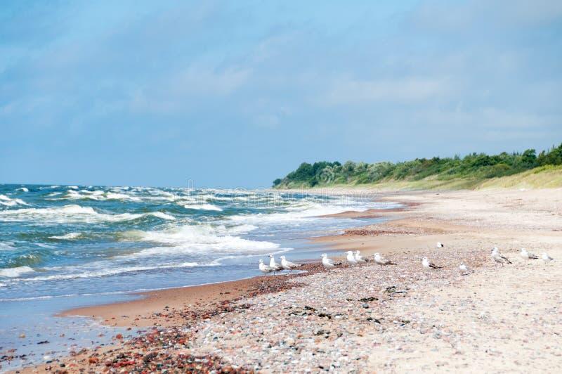 Zeemeeuwen op leeg strand royalty-vrije stock afbeeldingen