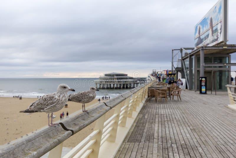 Zeemeeuwen op Scheveningen Pier In The Hague, Nederland royalty-vrije stock fotografie