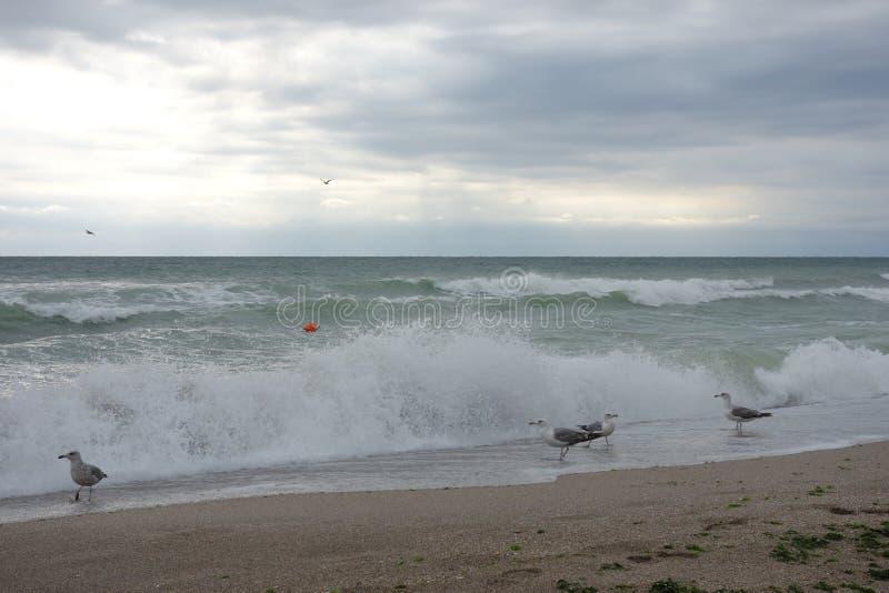 Zeemeeuwen op strand met schuimende golven royalty-vrije stock afbeelding