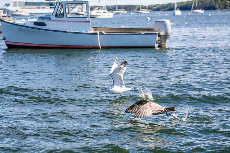 Zeemeeuwen voorbij Vastgelegde Boot stock foto
