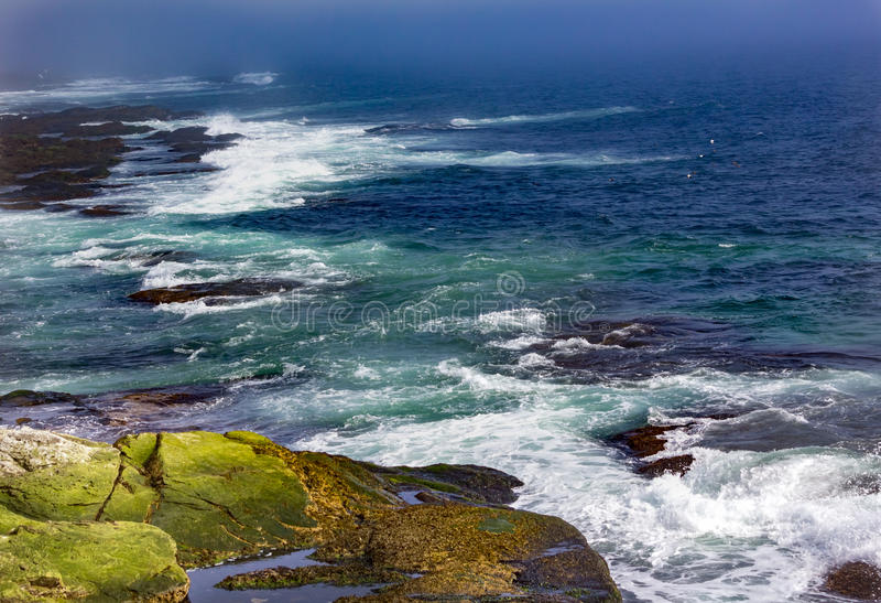 Zeemeeuwenvlieg en golvenneerstorting tegen kust in Beavertail, Jamest royalty-vrije stock afbeelding