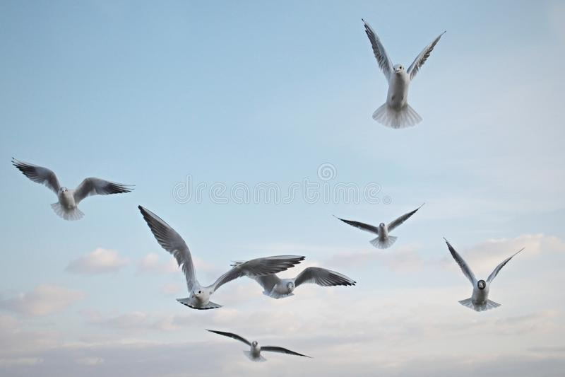 Zeemeeuwenvogels in de hemel royalty-vrije stock afbeeldingen