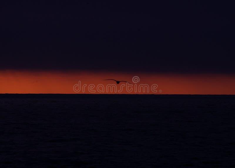 Zeemeeuwsilhouet tegen oranje zonsondergangnagloeiing royalty-vrije stock foto's