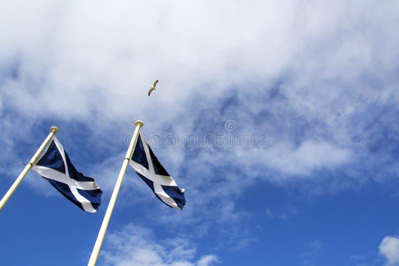Zeemeeuwvliegen over St Andrew Flag op blauwe hemel royalty-vrije stock afbeelding