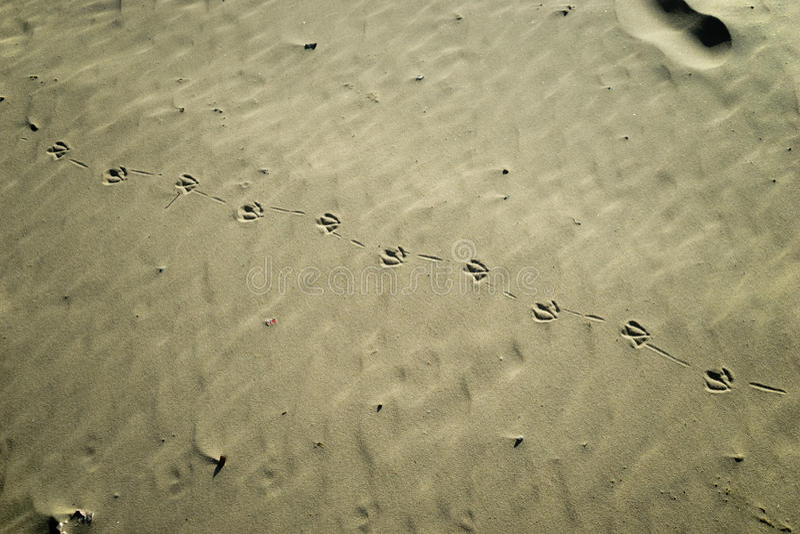 Zeemeeuwvoetafdrukken op het zand stock fotografie