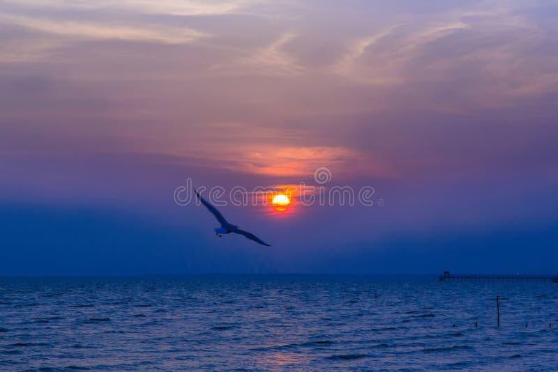 Zeemeeuwvogels tijdens zonsondergang stock foto's
