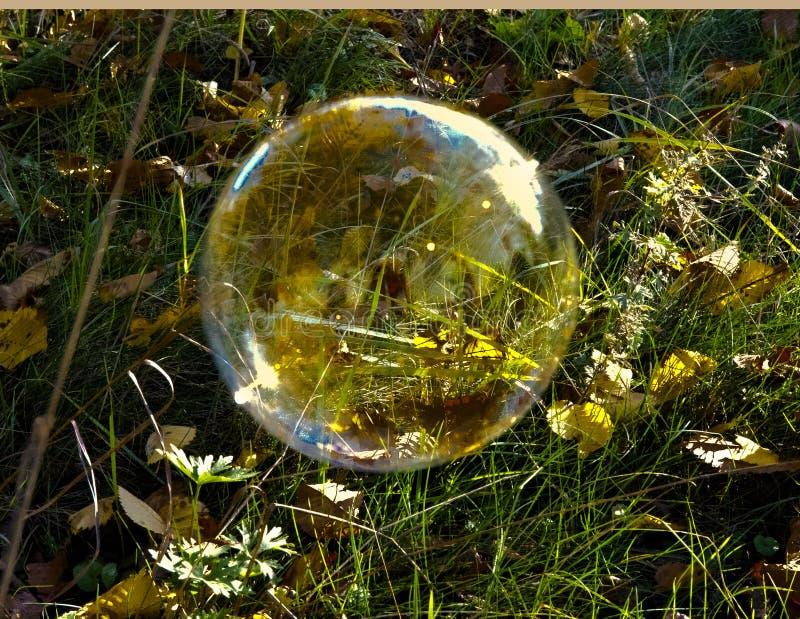 Zeepbel op het gras stock afbeeldingen