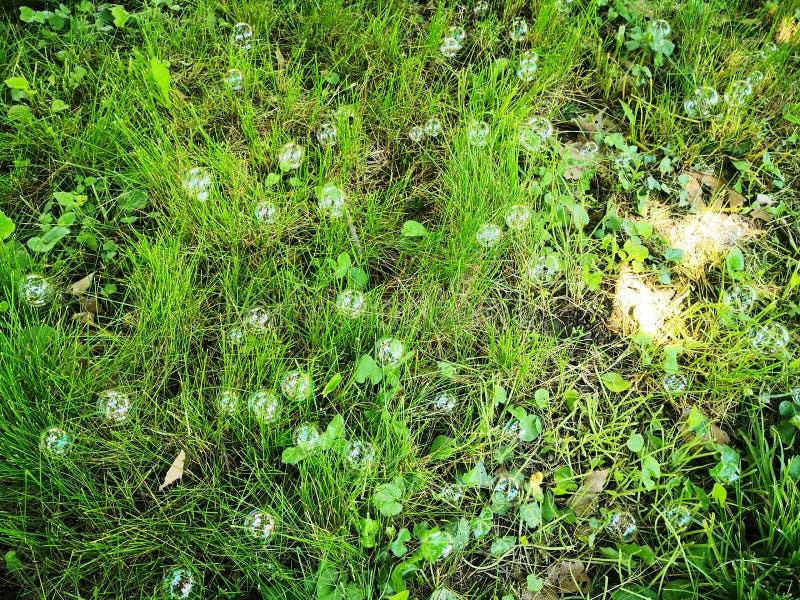 Zeepbels in groen gras royalty-vrije stock afbeelding