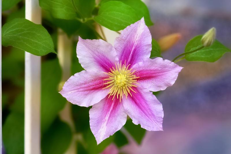 Zeer aardige bloem royalty-vrije stock fotografie