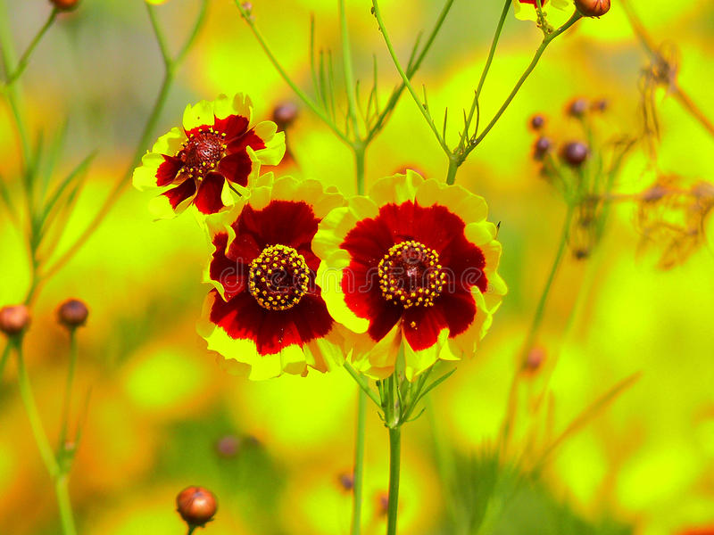 Zeer aardige bloemen royalty-vrije stock afbeelding