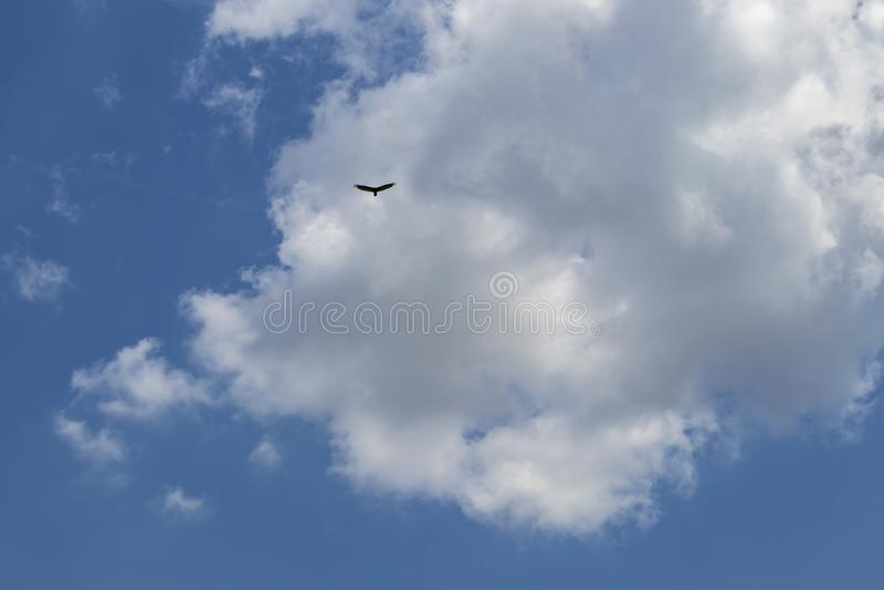 Zeer blauwe hemel met mooie pluizige wolken en een eenzame adelaar die hoog hierboven vliegen stock foto's