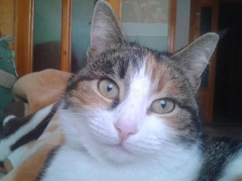 Zeer kalme kat die eigenaar bekijken royalty-vrije stock afbeeldingen