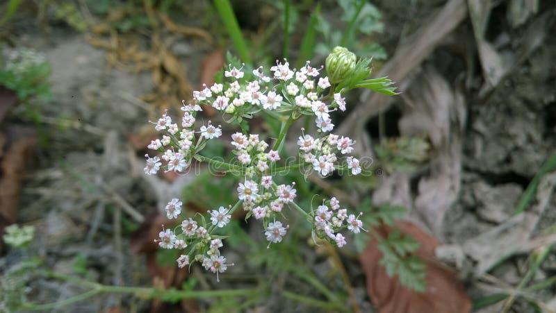 Zeer kleine bloemen royalty-vrije stock afbeelding