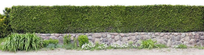 Zeer lange groene omheining stock foto's