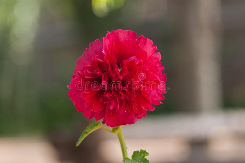 Zeer mooie bloem stock foto's