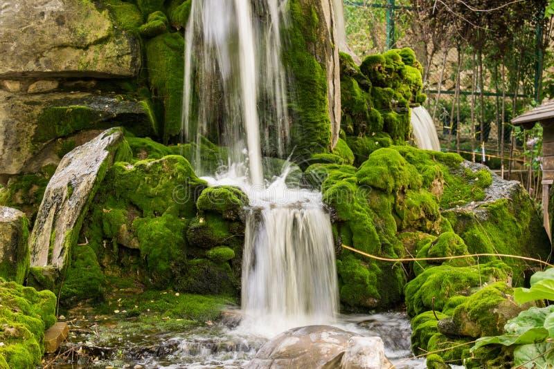 Zeer mooie kunstmatige watervallen met het leven water en het groeien mos Waterstromen van hierboven, plonsen en dalingen rond stock foto's